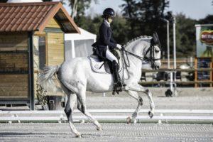 Feldenkrais auf dem Pferd
